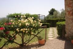 roses-on-fence-web